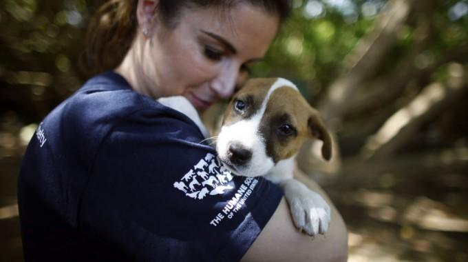Justicia celebra histórica colaboración interagencial con la Sociedad Protectora de Animales en pro del bienestar de los animales